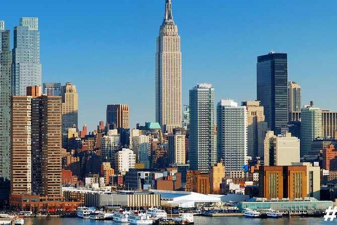 shiba inu new york